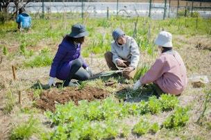個人の畝では平均で5種類ほどの作物が。最初の1〜2年間、苦戦した後に豊富な実りが実現する