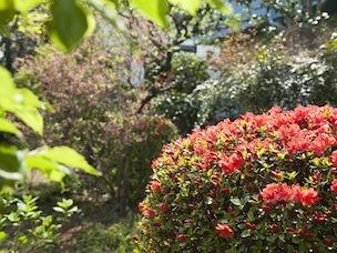 次来たときはどんな季節の花が咲いているだろうと、楽しみにしている参加者もいます