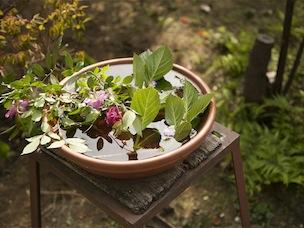 「水辺の回廊」の役割を果たす水鉢。小鳥が寄って水浴びをできるよう、浅い鉢に水をはっています
