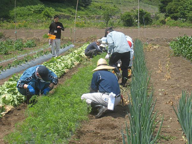 農業を学び、里山の暮らしや人とふれあう「川場村野菜づくり」
